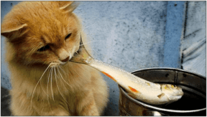 raw fish not to feed cats