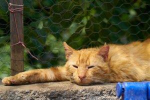 reasons of cats crying at night outside