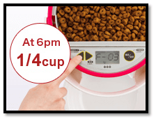 lusmo automatic pet feeder timing