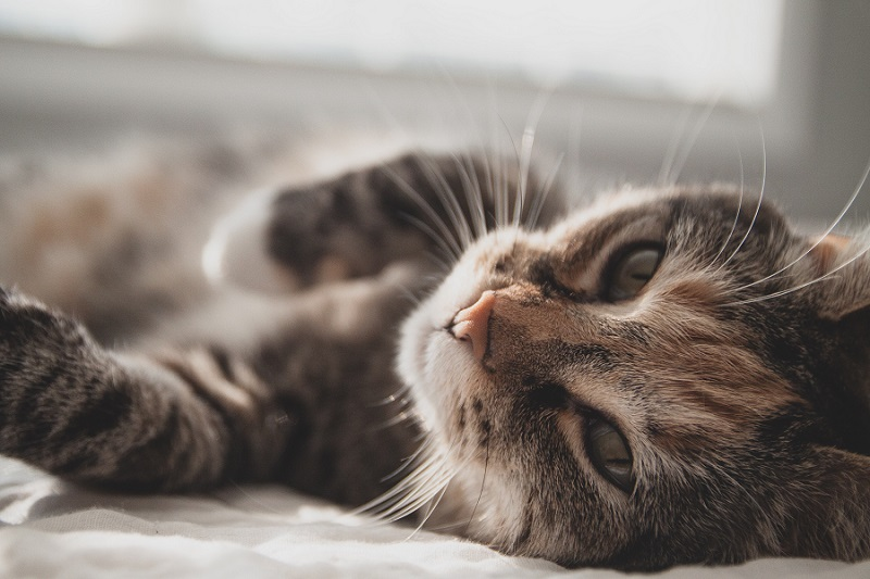 Food for Cat with Kidney Disease