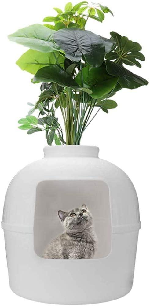Cat litter plants